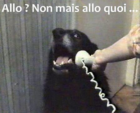 nabila-allo-chien-humour-detournement.jpg